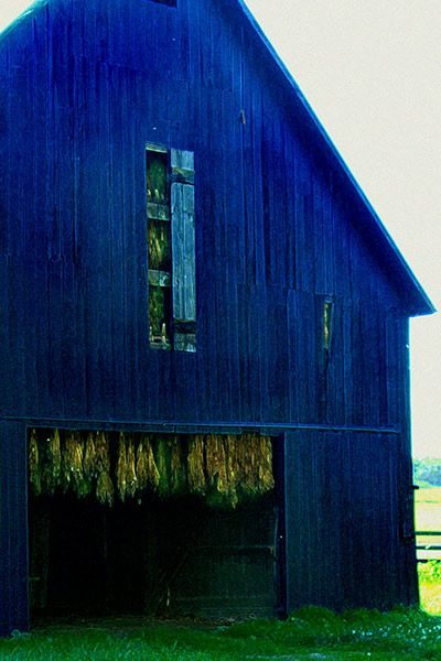 Blue Painted Tobacco Barn Kentucky