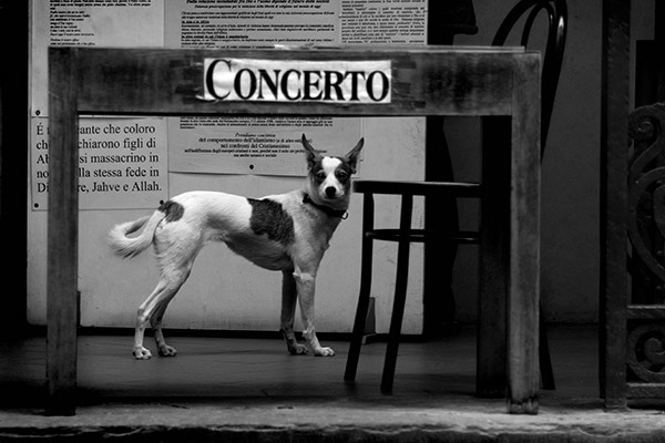 Pup E Concerto, Florence, Italy